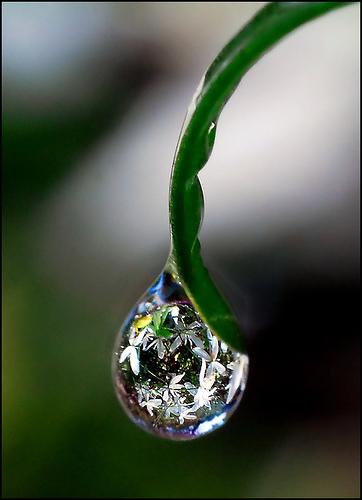 Percibe la eternidad de la Vida en una gota...