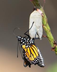 La Vida es transformación permanente