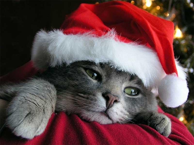Feliz Navidad para todos desde info-natura