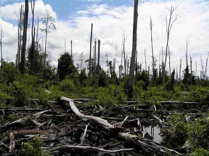 Se atestan de urbes las selvas ausentes...