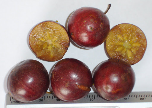 (Flacourtia indica)
