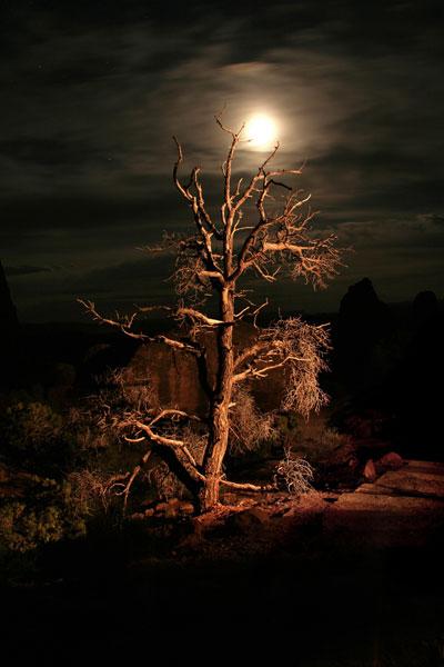 árbol atemporal