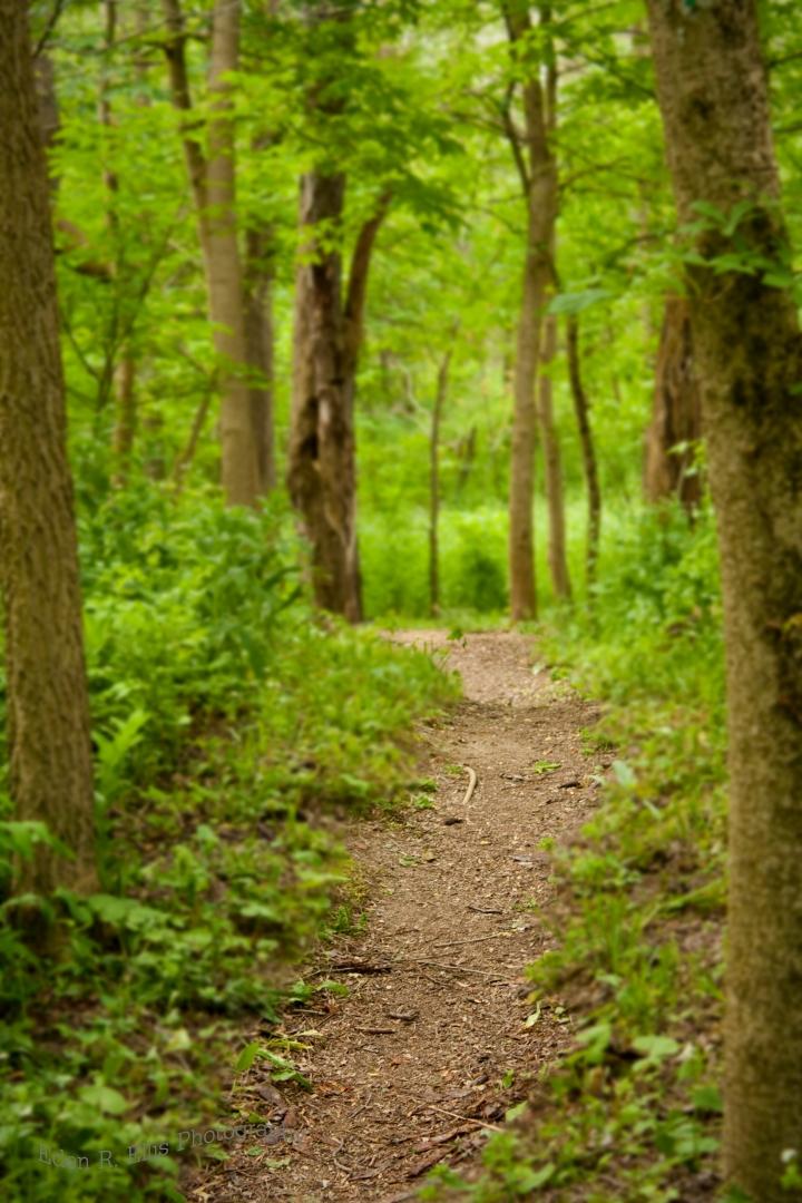 el sendero 3