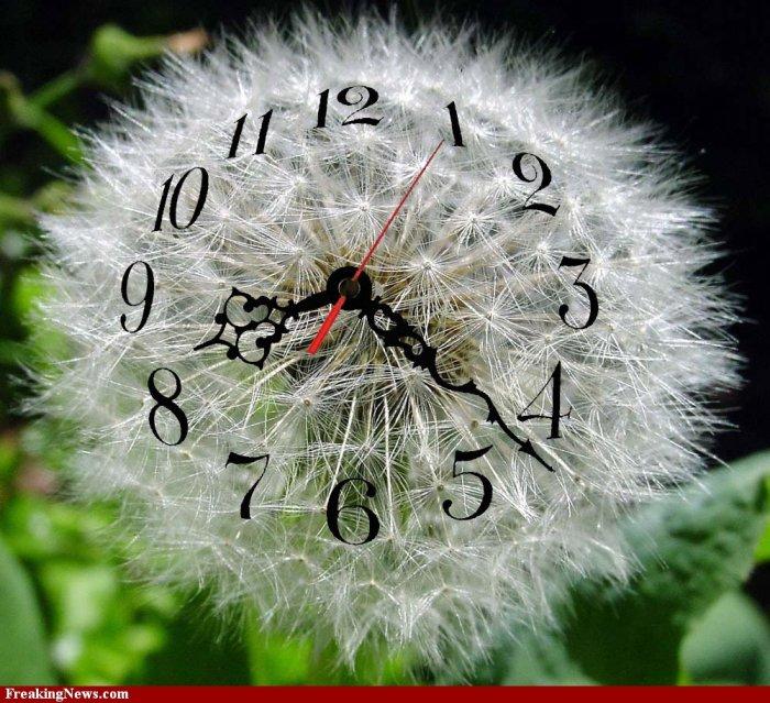 reloj diente de leòn