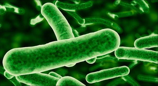 cianobacterias 2