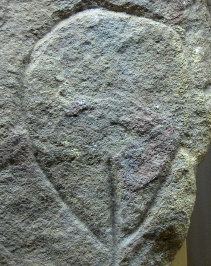vulva paleolítica