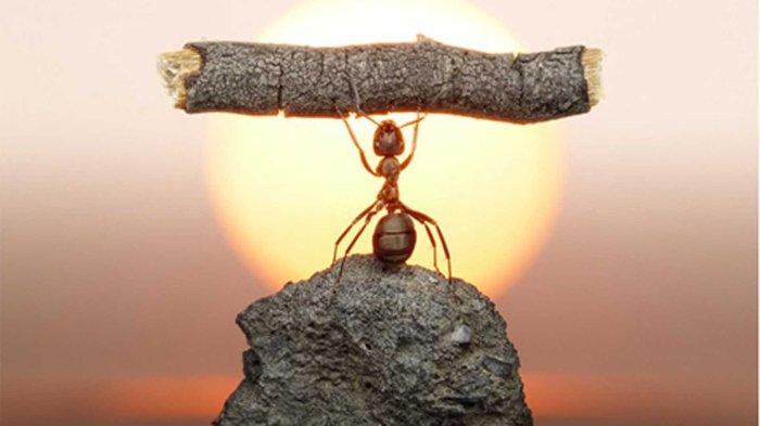 resiliencia-hormiga