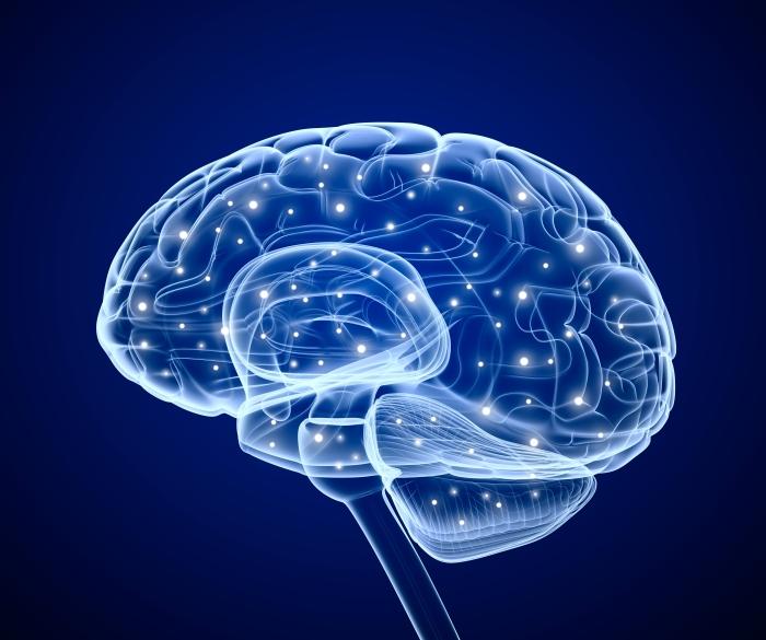 cerebro-333