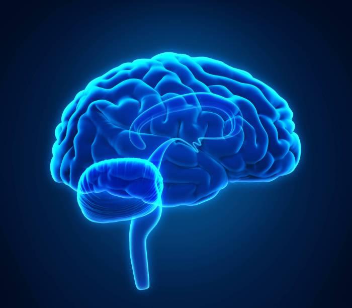 cerebro-444